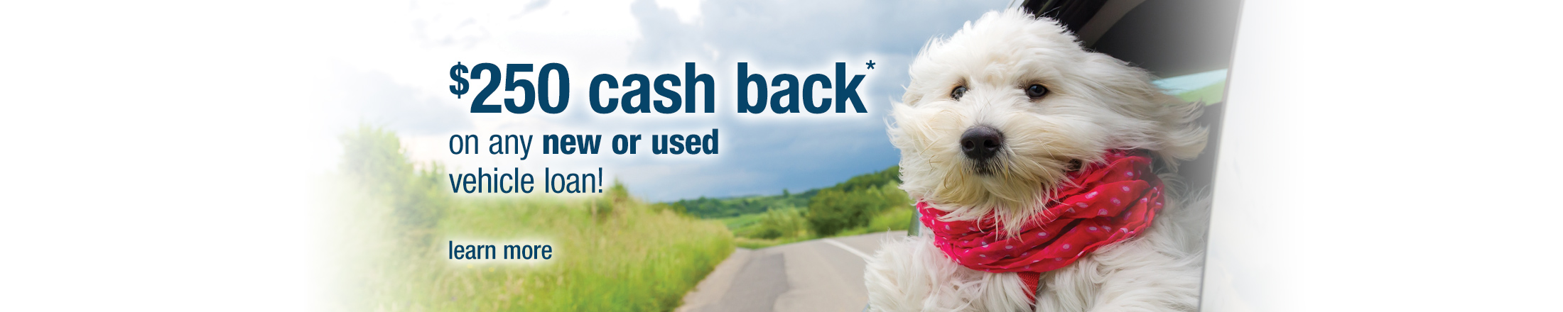 $250 cash back auto loan special